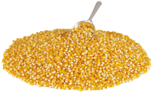 OrganicYellow Popcorn product image.