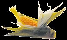 OrganicCorn product image.