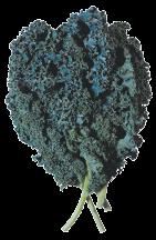 PRODUCE Organic Lacinata Kale reg. $2.99 product image.