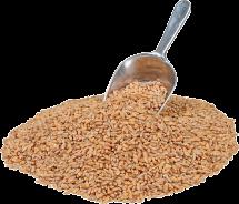 100% Organic Pearled Barley product image.
