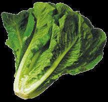 OrganicLettuce product image.